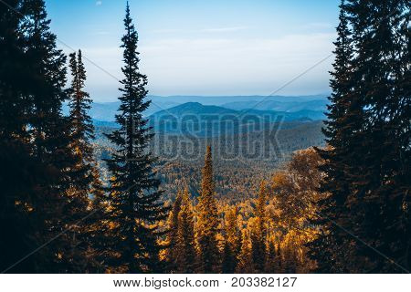 Beautiful autumn landscape from high point in Altai mountains with fir trees in foreground and hills overgrown with forest in misty background Russia Manzherok district