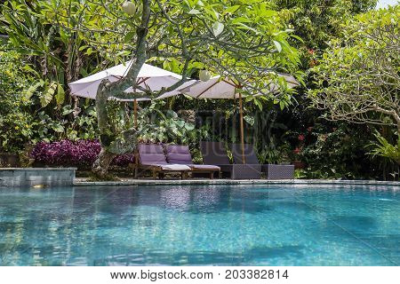 Swimming pool water green leaves of trees and deck chairs in tropical garden. Island Bali Ubud Indonesia
