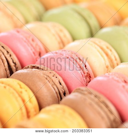 Macarons Macaroons Cookies Square Dessert From France