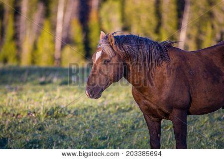 Pryon Mountain Mustangs
