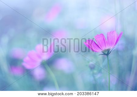 Delicate purple flowers on a blue blurred background. Soft selective focus.