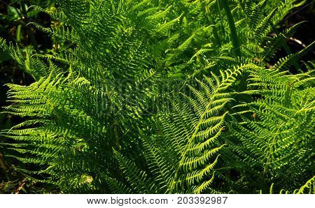 green fern in the forest fern, forest, green,
