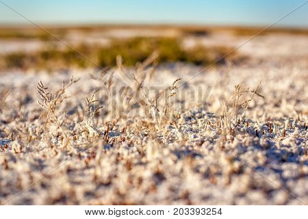 Steppe saline soils of Kazakhstan, close up view