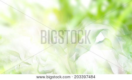Blur background sun lighting and bokeh bright gree is Pandan in plant or garden.