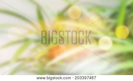 Blur abstract background green concept is Pandan in plant or garden.