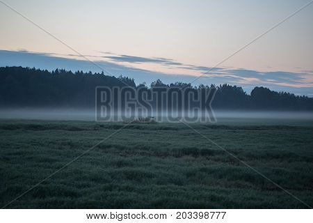 field in front of the forest in the early morning