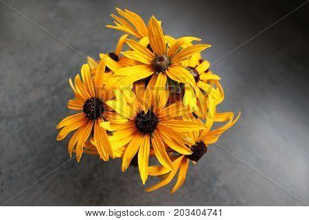 Fleur jaunes dans pot de fleur sur fond gris