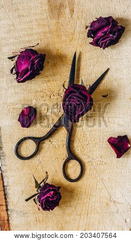 Rusty Scissors with Dry Rosebuds and Few Petals on Wooden Surface. Vertical Orientation.