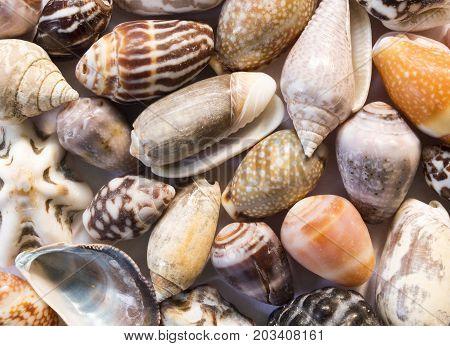 Diverse sea shells background. Small shells closeup. Sea shell banner template. Tropical island seashore finding. Exotic island beach texture. Warm sea nature detail. Marine shell cover top view.