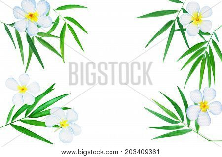 Green bamboo leaves ad plumeria flowers watercolor illustration. Handdrawn zen oriental background. Oriental banner template with text place. Tropical floral decor. Spa beauty or wellness backdrop