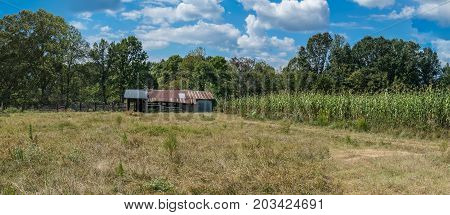 Panorama of a north Mississippi sorghum field at harvest time.