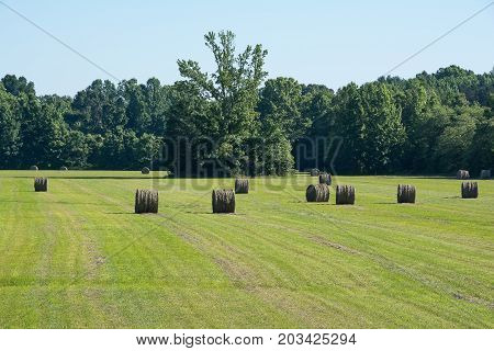 Round hay bales in the hay field.