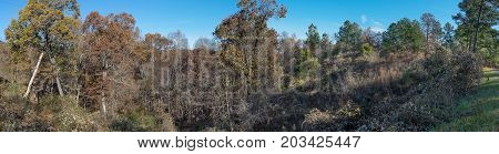 A rural panoramic image captured while driving on a remote Mississippi logging road.