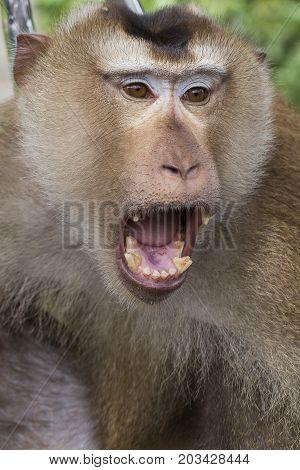 Monkeys portrait close up. Monkey face macro