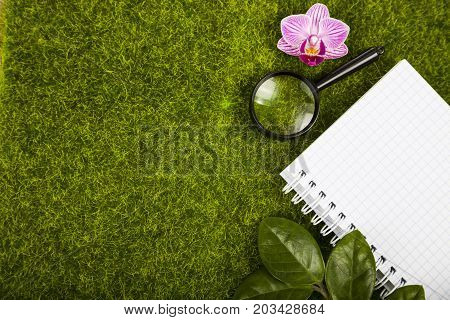 Notebook, Magnifier And Green Leaves