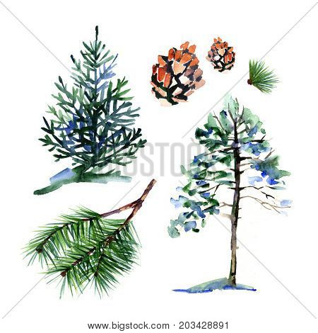 Coniferous trees and elements - a symbol of new year and Christmas. Watercolor