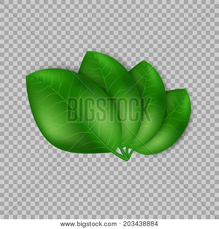 Leaves design elements. Green sprout green leaves symbol vector concept on transparent background. Ecological theme. Greenery. Eco. Vector Illustration.