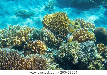 Sea fish wildlife in coral reef. Tropical seashore inhabitants underwater photo. Coral reef animal. Warm sea nature. Colorful sea fish and corals. Undersea view of marine life. Coral reef landscape