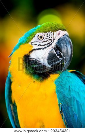 colorful Parrot, lovely bird animal and pet