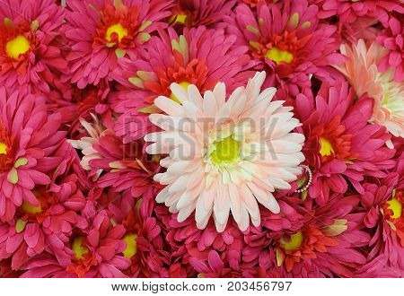 Background of Pink Artificial Daisy Flowers Around White Daisy Blossom for Home and Building Decoration.
