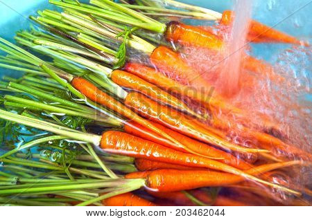 Soak Carrots In Bowl With Water And Washing By Splash Water