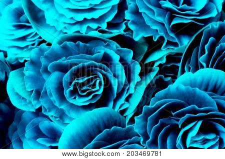 Flower background blue begonias symbol of love and desire for floral wallpaper