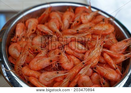 Bucket Of Fresh Boiled Pink Small Shrimps Close Up