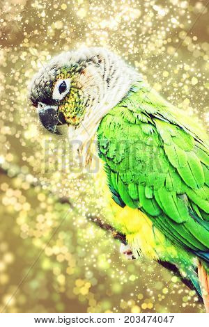 Beautiful colorful parrot with shimmering background. Beauty in nature. Green photo filter.