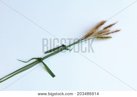 Seed heads from grasses tied with blades of grass, isolated on white