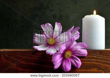White burning candle and cosmos flowers on dark grunge background