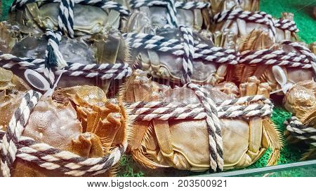 Fresh hairy crabs bound up with black and white cords for sale. A closeup view.