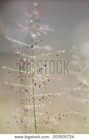 Grass nature background in the morning of soft focus photo for design backdrop in your work.
