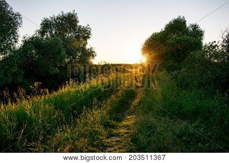 Rural road, overgrown with grass in sunlight