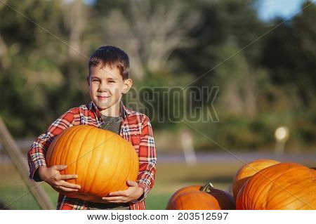 Happy boy picking a pumpkin for Halloween. smiling boy is carrying a pumpkin. farm scene. Copy space for your text
