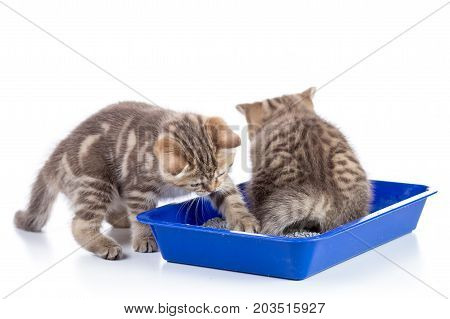 Funny kittens sitting in a cat toilet isolated on white background