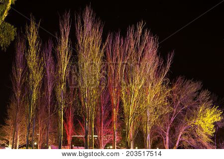 Trees lit by coloured floodlights at night in a park