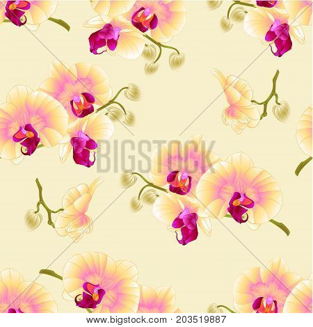 Seamless texture beautiful Phalaenopsis Orchid Yellow stem with flowers and buds vintage vector closeup editable illustration hand draw