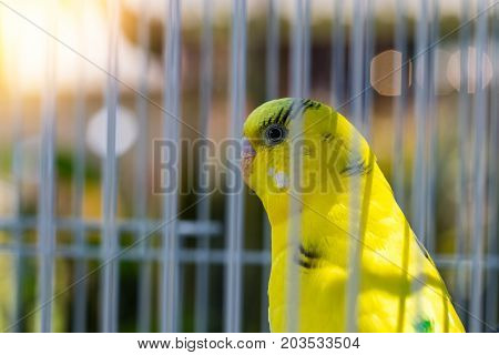bird of paradise in the cage with nature background