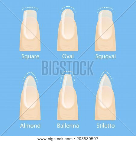 Nail manicure, set of nails shapes - oval, square, almond, stiletto, ballerina squoval Vector