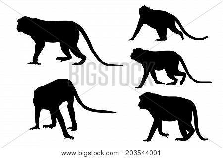 Silhouette image of monkeys on white background.
