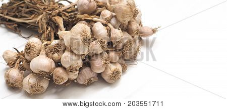 Background garlic dry isolate on white wood has copy space Macro photo and close up focus select at center of image.