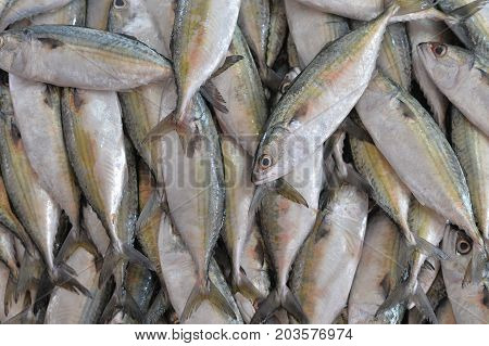 close up view of fresh fish selling on market