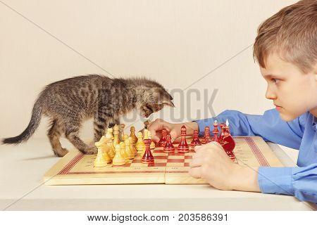 Little grandmaster with a tabby kitten plays chess.