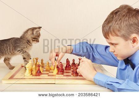 Beginner grandmaster with a kitten plays chess.