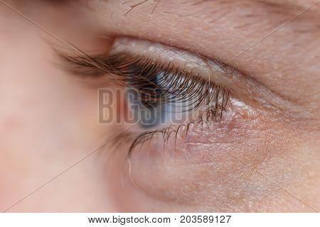 Eyelashes close up. Macro image of human beautiful grey eye with long eyelashes. Selective field of focus.