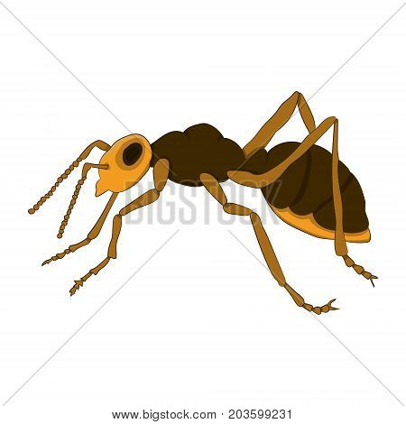 Cartoon ant on a white background. Vector illustration. Hand drawing.