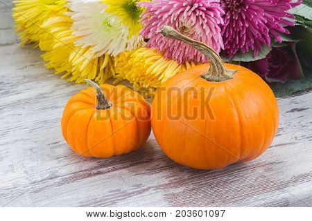 two orange pumpkins with fall mum flowers on white wooden table