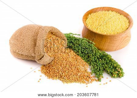 Millet in a wooden bowl, burlap bag and green spikelets isolated on white background.