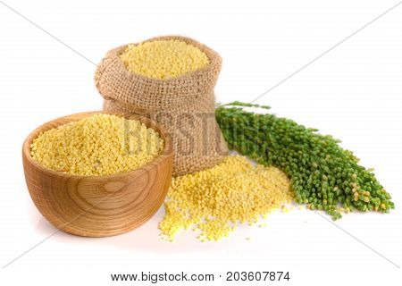 Millet in a bag and bowl with green spikelets isolated on white background.