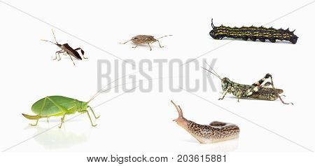 Some invertebrates  of North Carolina on a light background with shadows.